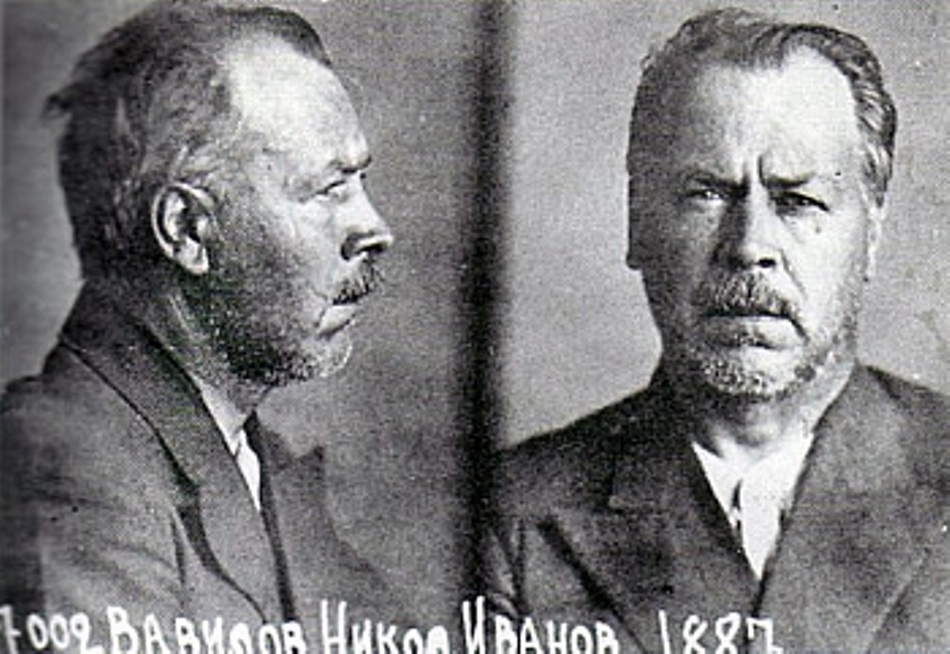 Nikolai Vavilov după arestarea sa de către regimul opresor sovietic
