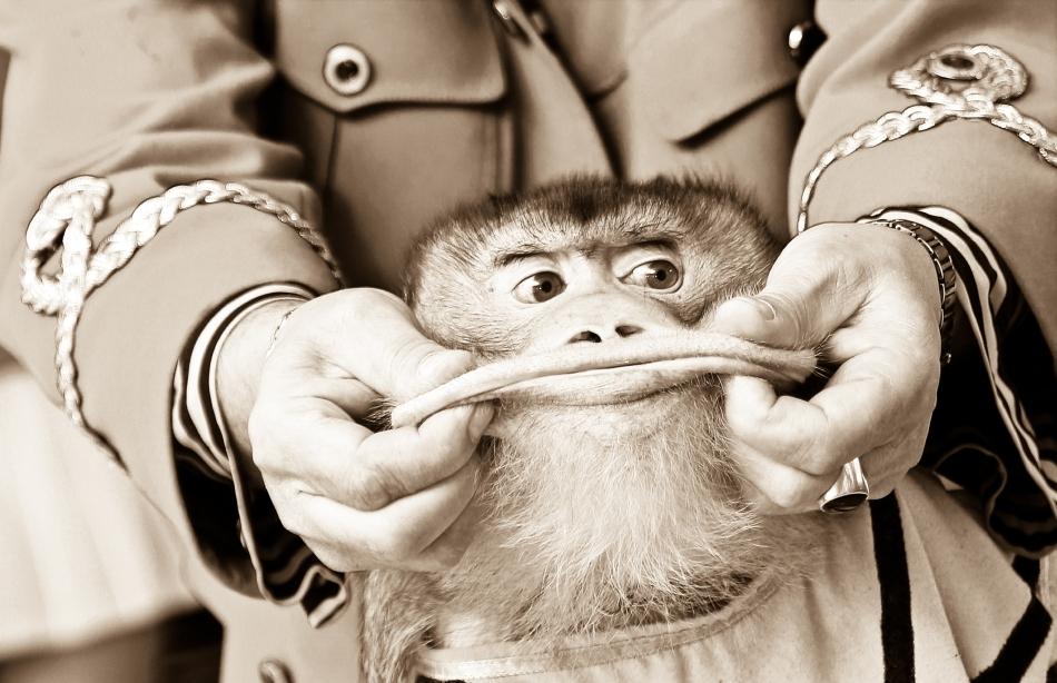 Om şi maimuţă sub ridicolul timpurilor