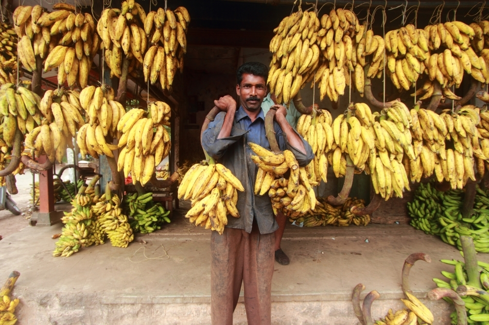 Bananele sunt o sursă vitală de hrană şi de venit pentru locuitorii ţărilor în curs de dezvoltare.
