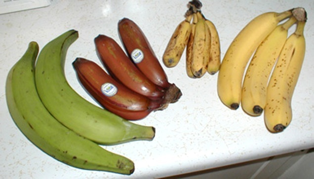 În lume sunt cultivate şi consumate mai multe specii şi numeroase soiuri de banane.