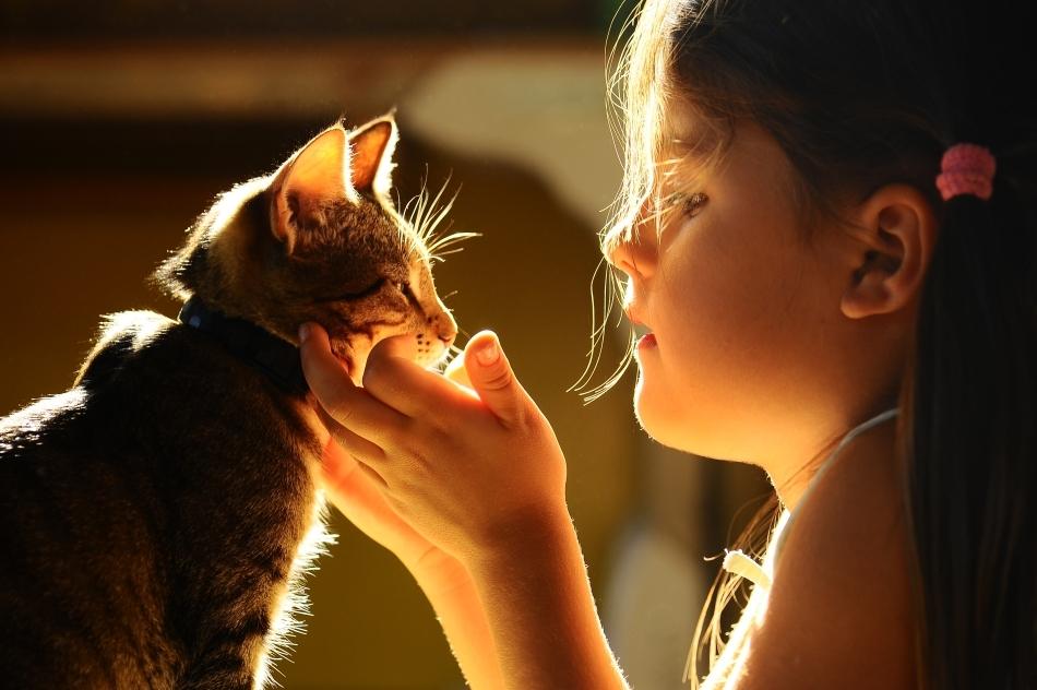 Pisicile nu sunt nepăsătoare faţă de prezenţa noastră, dar nici ne văd aşa cum credem noi.