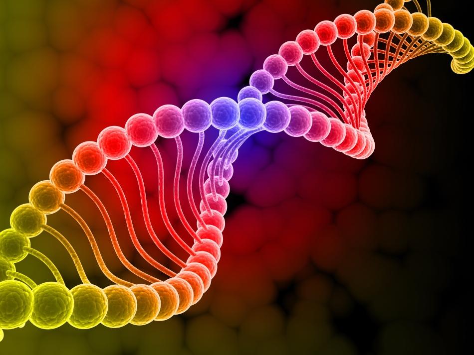 Deosebirile dintre denisovani, neanderthalieni şi oamenii moderni, precum şi genele pe care le au în comun, au fost descoperite graţie tehnicilor sofisticate de extracţie şi analiză a ADN-ului.