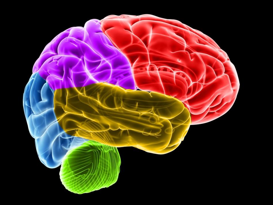 Ce sex are creierul tău?