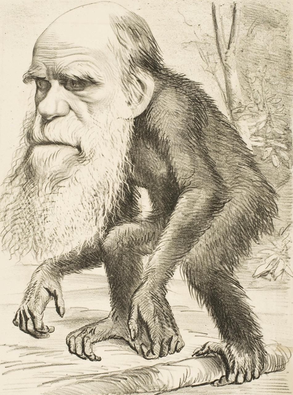 Caricatură din presa vremii (1871) care îl prezintă pe Darwin sub forma unei maimuuţe primate.