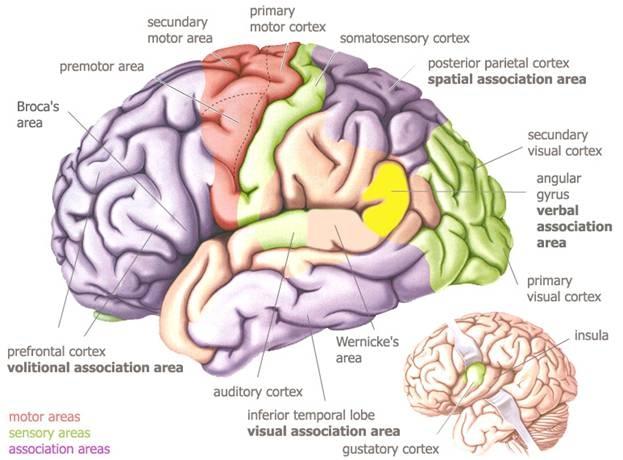 oamenii de știință descoperă paraziți ai creierului