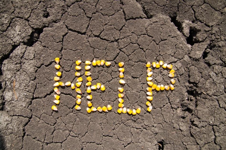 aridizarea solului