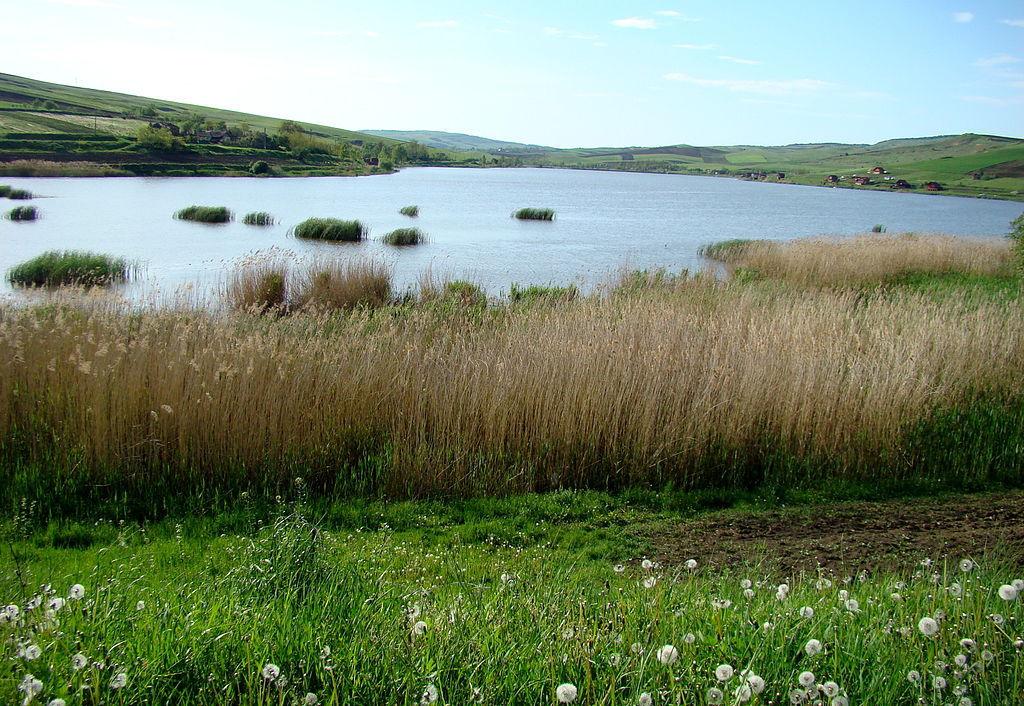 Salba de lacuri de pe valea Fizesului