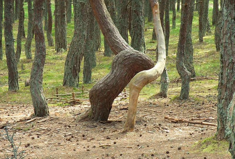 Pădurile neobişnuite din lume.