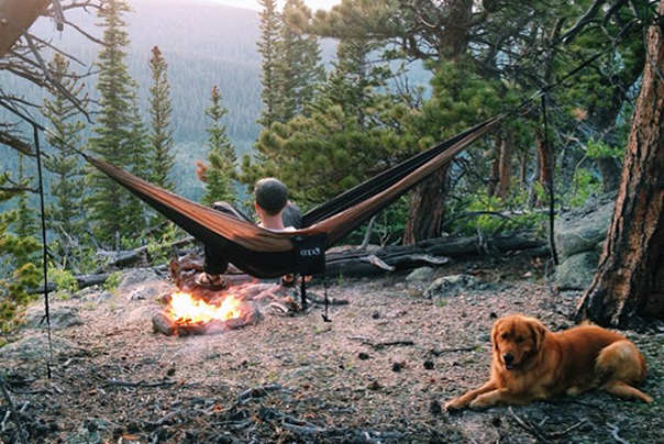 Aspen, câinele fotogenic din Colorado care a  devenit viral pe Internet