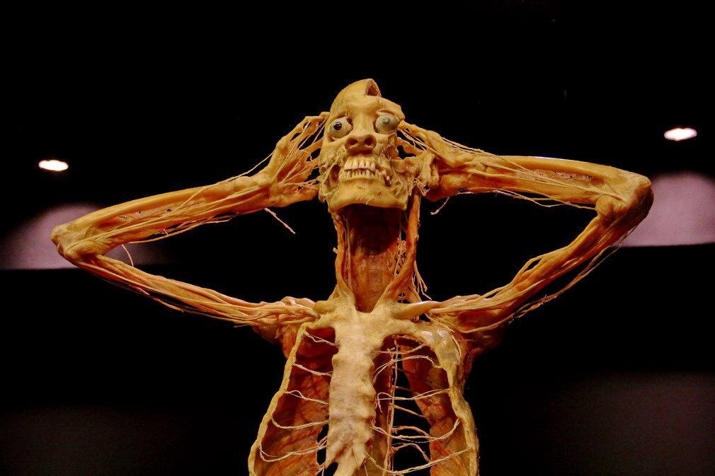 ''Our Body: Universul interior'', corpuri umane plastifiate şi peste două sute de organe