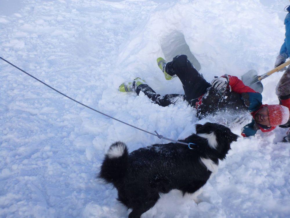 Salvamont România are şase echipaje canine de intervenţie acreditate