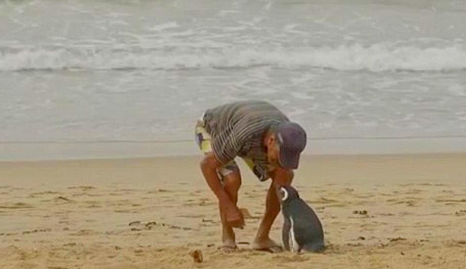 Joao Pereira de Souza a salvat un pinguin, iar aceste se reîntoarce anual să-l viziteze.