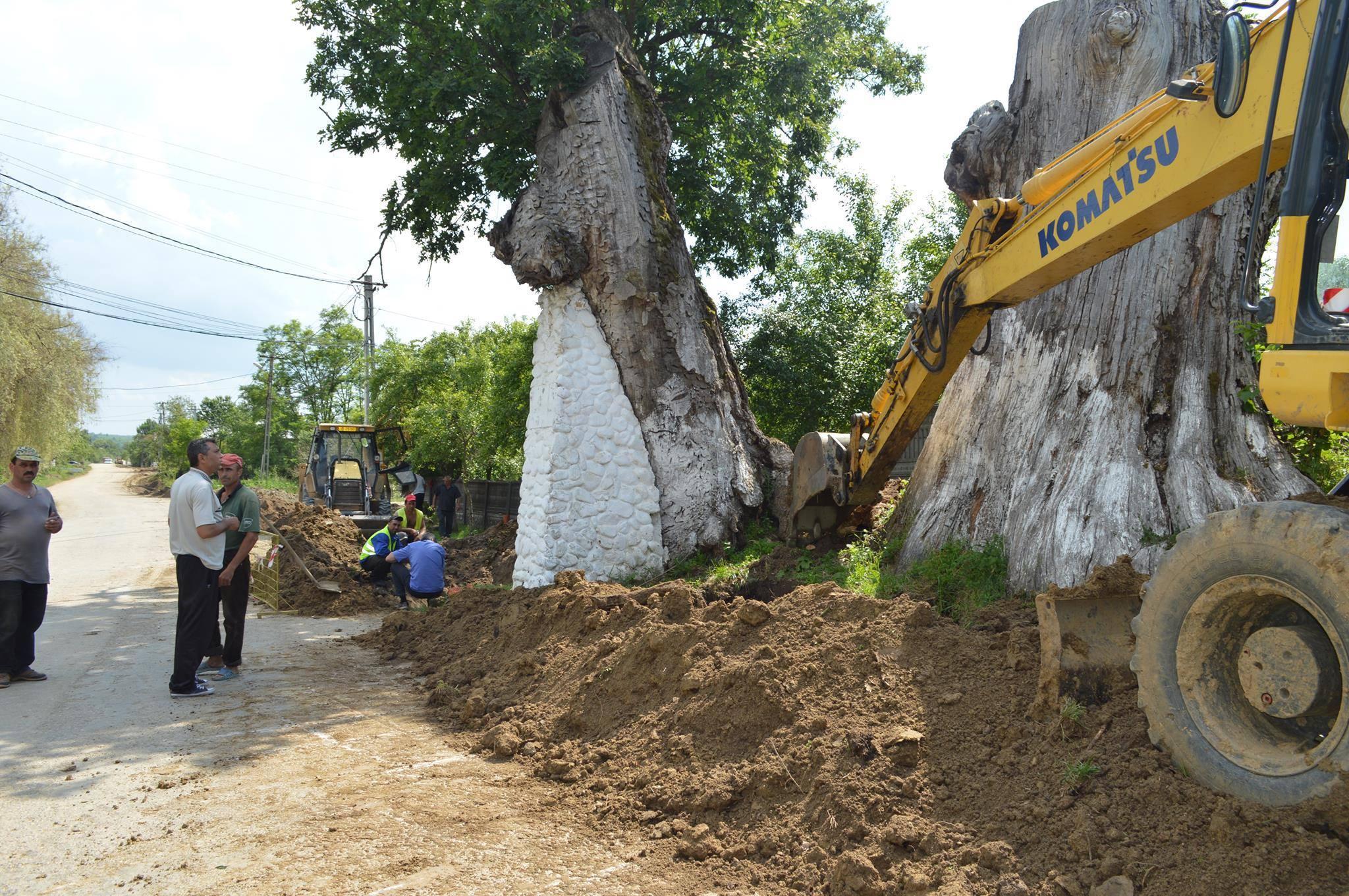 Anchetă în comuna naistului Gheorghe Zamfir după ce rădăcinile arborilor seculari au fost retezate