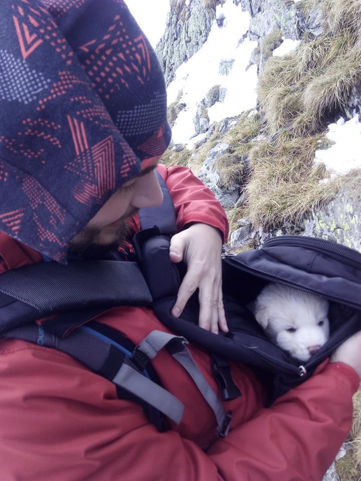 Patru pui de câine au fost salvaţi din Munţii Făgăraş. Gestul IMPRESIONANT al unui grup de români
