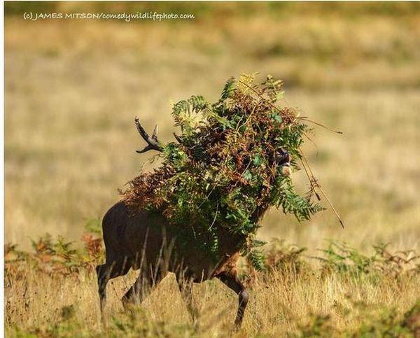 Aceste imagini sunt finalistele Comedy Wildlife Photography Awards