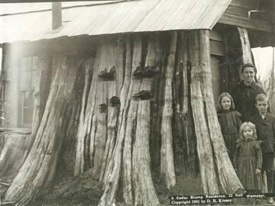 Casele coloniştilor din zona Pacificului de Nord-Vest au fost construite pe buştenii abandonaţi de companiile forestiere