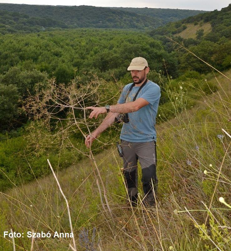 Biologii au identificat o nouă specie de plantă în România