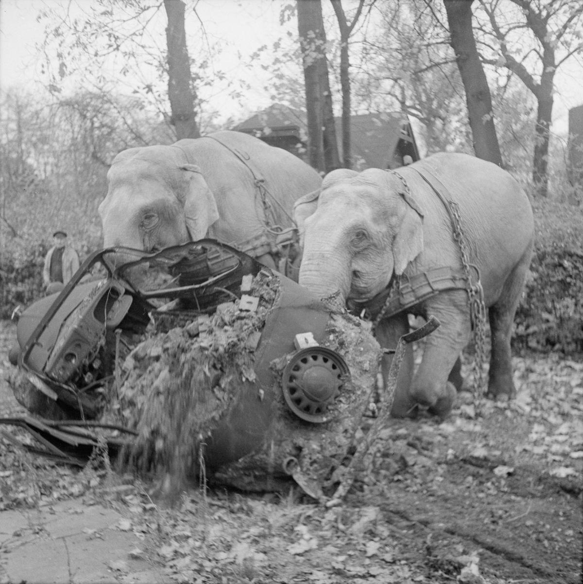 Imagini bizare din perioada celui de-Al Doilea Război Mondial