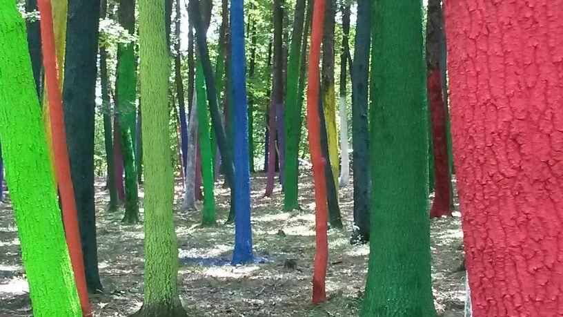Manifest artistic împotriva defrişării pădurilor