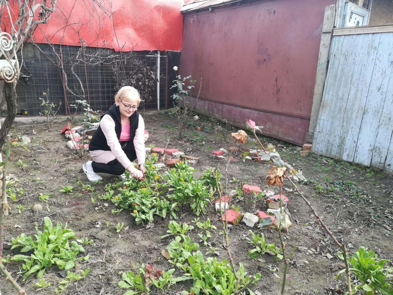 Căpşuni şi flori de primăvară, apărute în ianuarie, din cauza temperaturilor ridicate