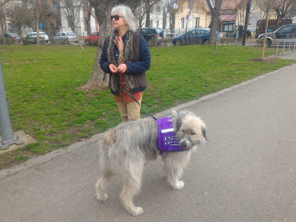 Câinele care a devenit ajutorul unei femei cu autism