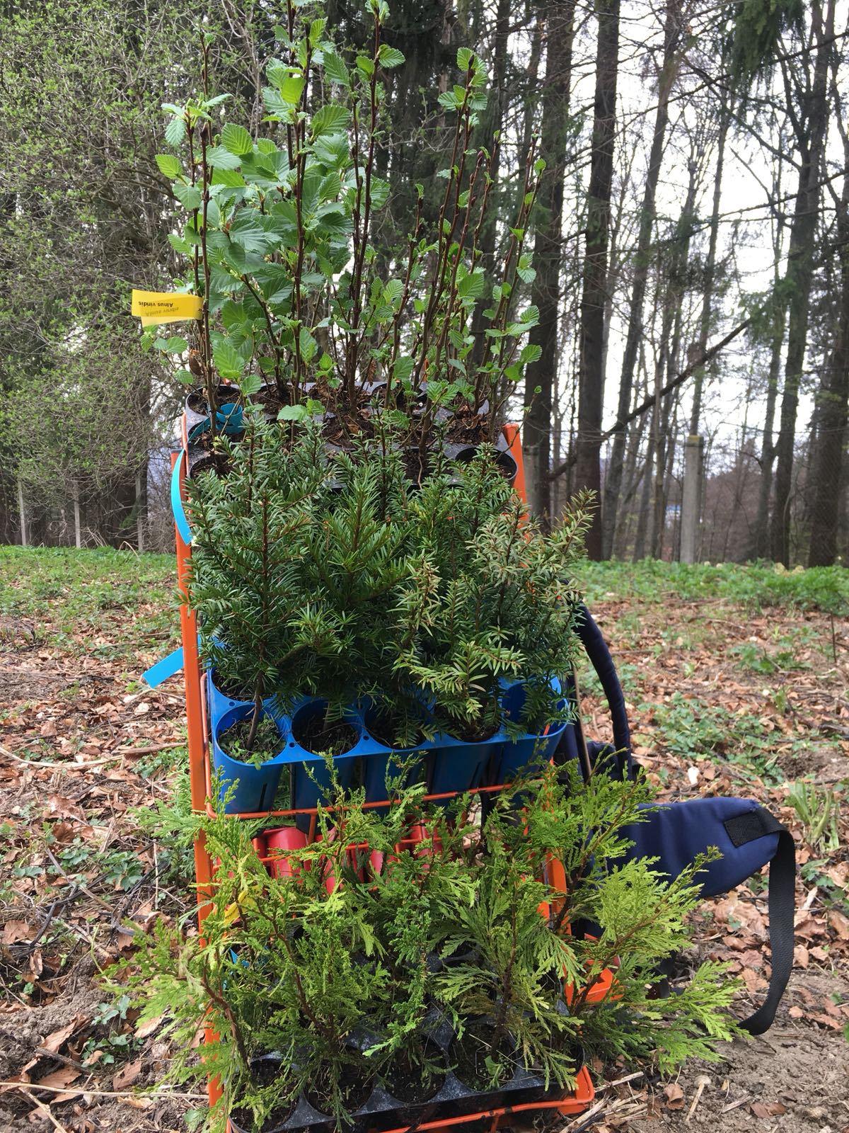 Principesa Maria a plantat mai mulţi arbori în Vulpărie, pe domeniul Regal Sinaia