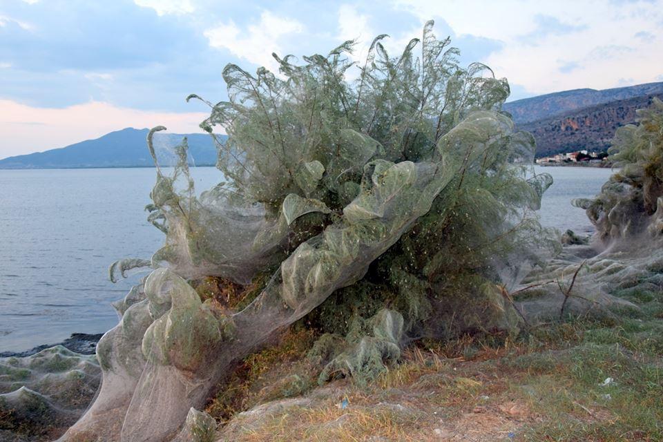 Pânză de păianjen în Grecia
