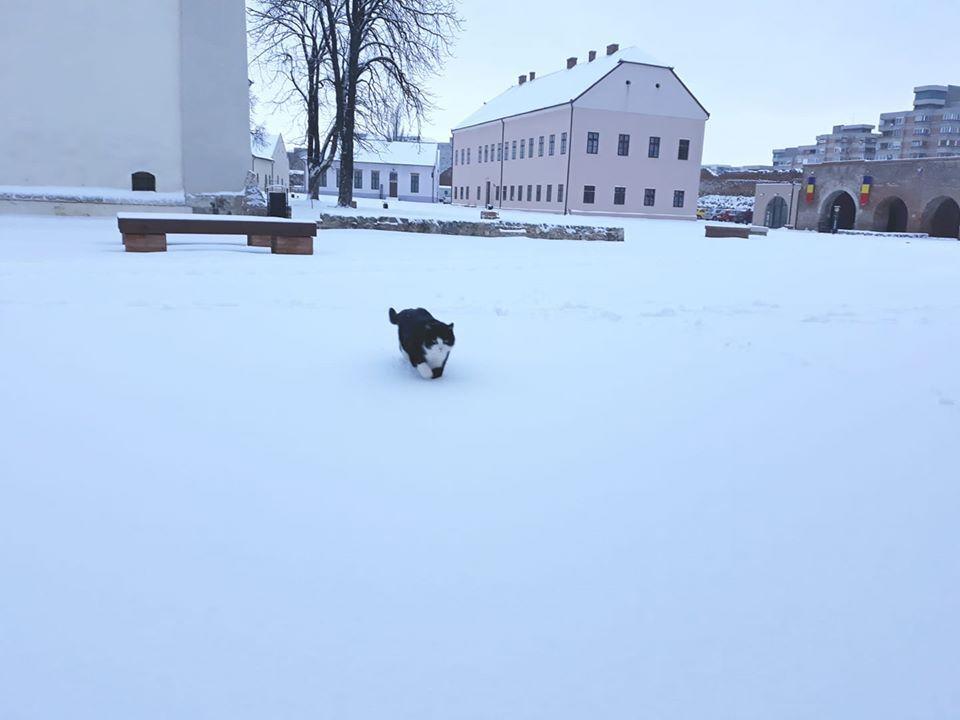 Mici, pisica vedetă în Oradea