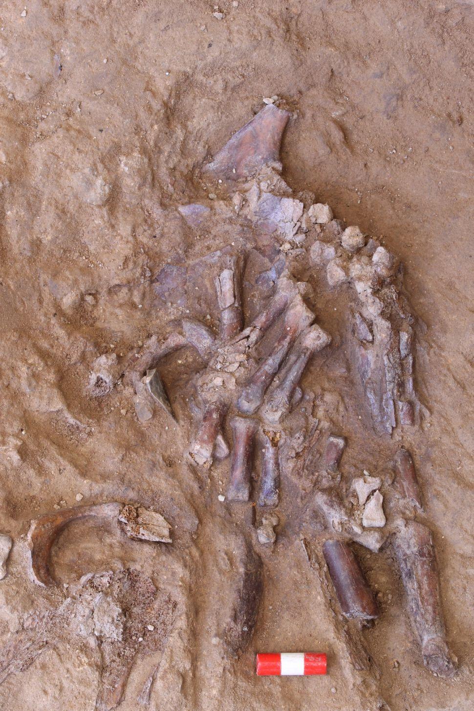 Descoperirea unui Neanderthal în Peştera Shanidar